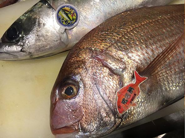 明石の真鯛と伊奈の真鯖